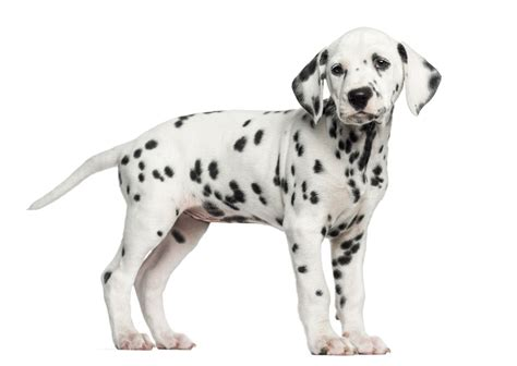 Top 20 Cutest Dog Breeds That are Guilty of Being Too Adorable