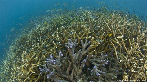 Climate change causes Australia to downgrade Great Barrier