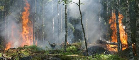 Natural disturbance | Trees for Life